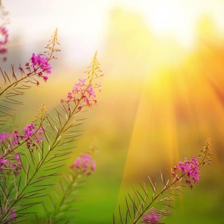 El amanecer de primavera