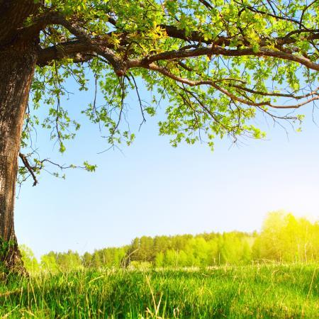 La vida se renueva con la primavera
