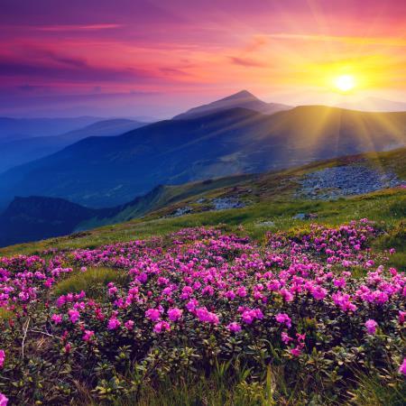 Atardece en campos lilas