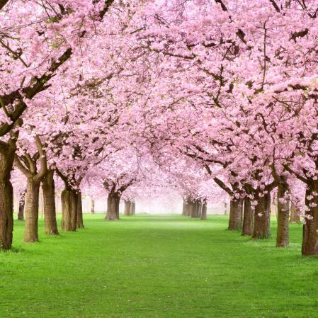 Camino de primavera