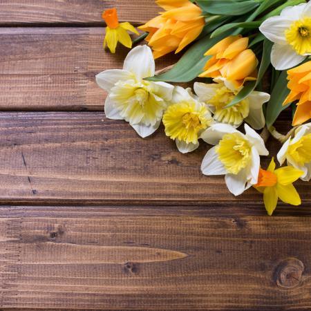 La primavera esta entre nosotros