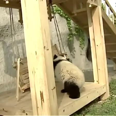 SOLO PANDAS