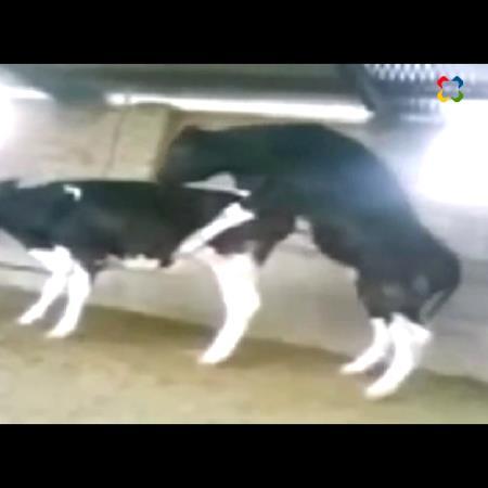 Toro y Hamster locos
