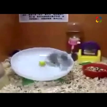 Ratones y pingüinos